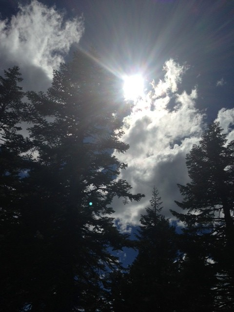 Sun, clouds, firs on Mt. Ashland